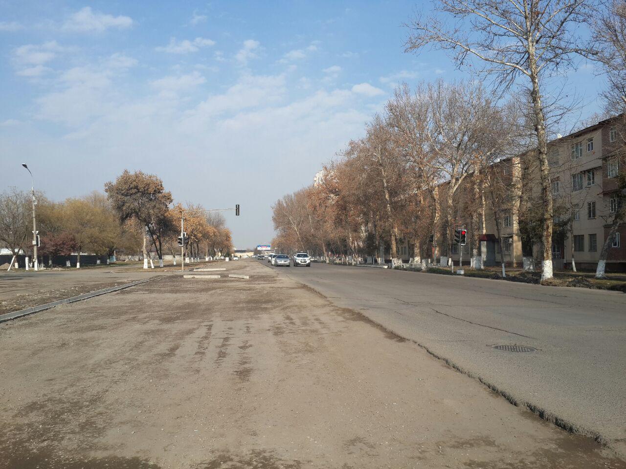 Ремонт дороги, обещанный почти год назад, решили начать с вырубки многолетних деревьев (фото)