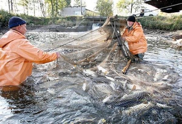 Для развития рыбоводства Узбекистан привлечет зарубежных специалистов