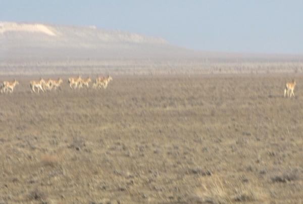 Лошади Пржевальского и другие открытия в дикой природе экоцентра «Джейран»