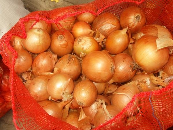 Бесплатный лук: хокимият Ташкента начал раздавать населению резервные запасы