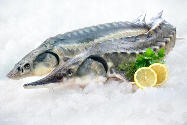 К 2020 году Узбекистан начнет выращивать  форель, осетровых и лососевых рыб