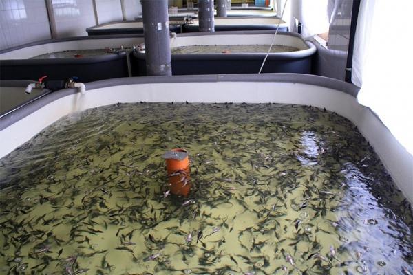 Скоро в Узбекистане будет вдоволь рыбы