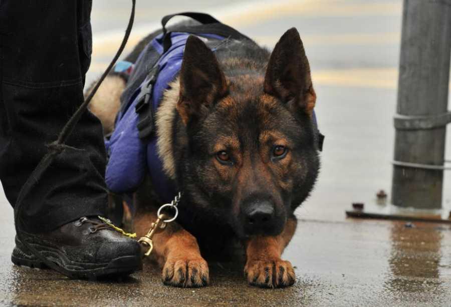 В Казахстане служебная собака обнаружила наркотик в носках гражданина Узбекистана