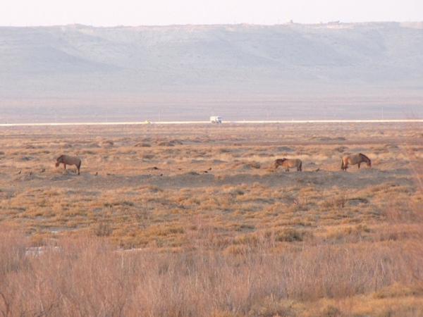 Насколько эффективна охрана природы в Узбекистане?