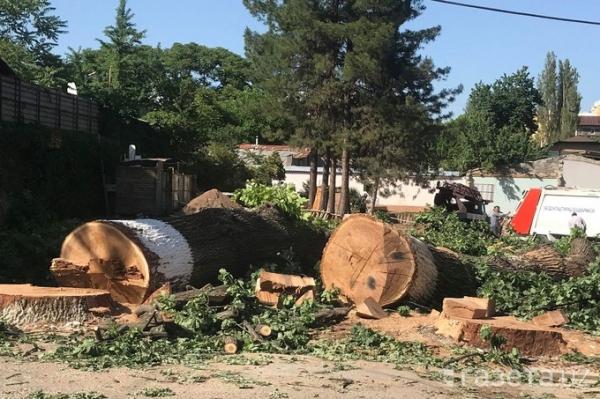 Вырубка деревьев: как чиновники Госкомэкологии запутались во лжи