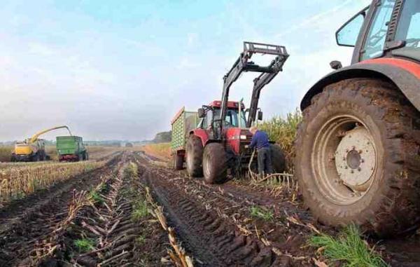 В Ташкентской области прокуратура возбудила уголовные дела в отношении нескольких фермеров