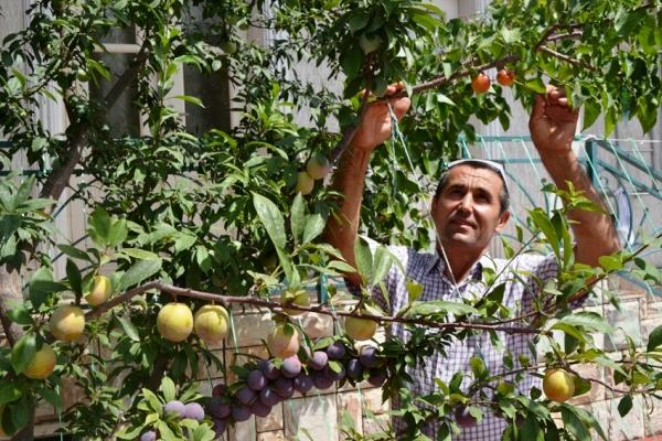 Житель Ферганской области вырастил на одном дереве 18 видов фруктов