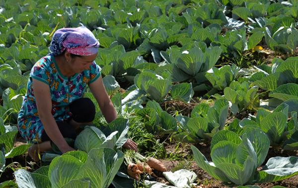 В Узбекистане более 80% сельхозпродукции производится на личных подворьях