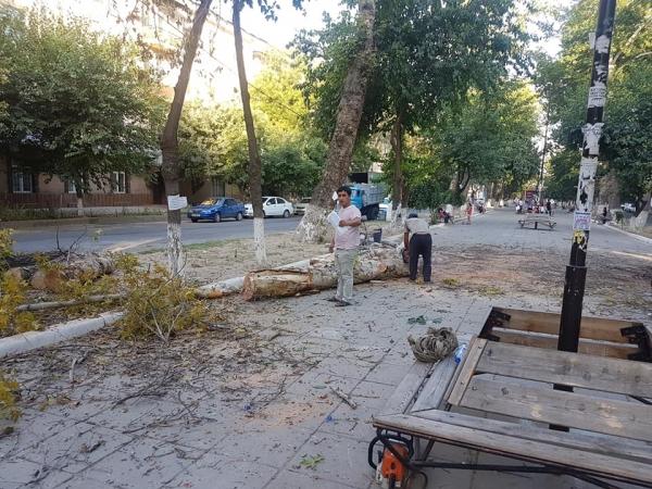 После вырубки деревьев на Гагарина хокимият Чиланзара призвал граждан заявлять на лесорубов