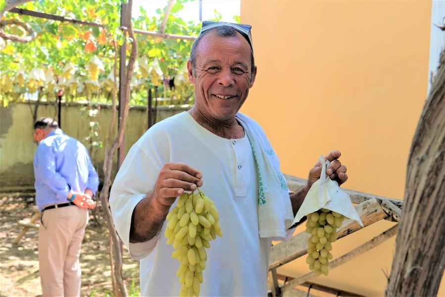 Всемирный банк выделяет  $500 млн на развитие плодоовощеводства в регионах Узбекистана