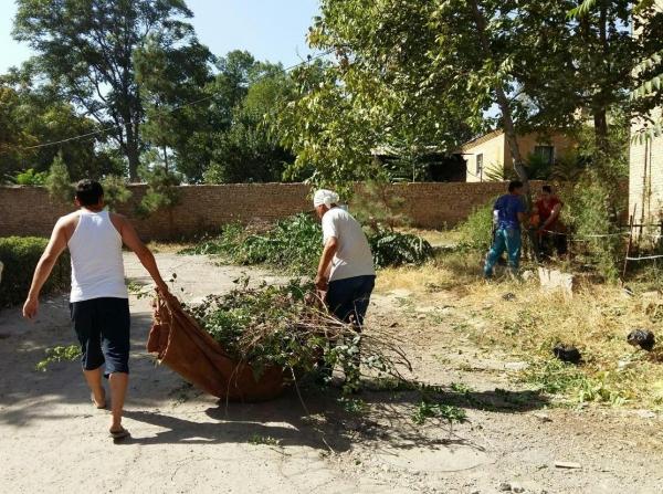 Ташкентский предприниматель организовал посадку более сотни деревьев в родной махалле (фото)