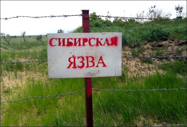 В Ошской области Кыргызстана зафиксированы 12 случаев сибирской язвы