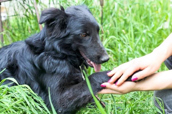 На портале Mening Fikrim запущена петиция против жестокого обращения с животными