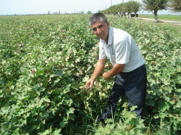 Капельное орошение - необходимая реальность для Узбекистана