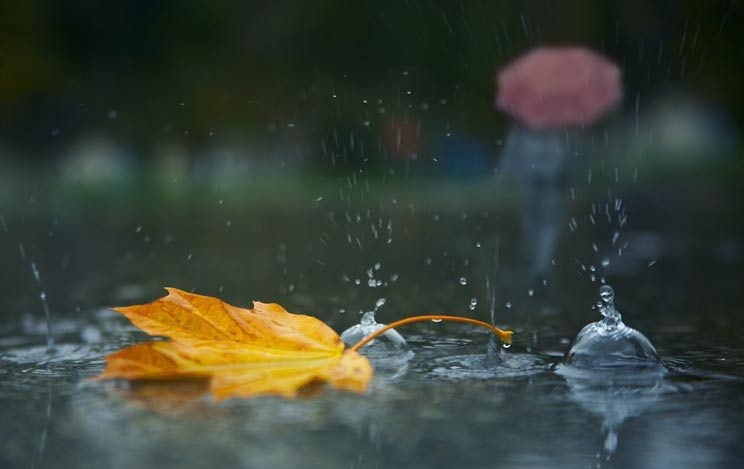 К концу недели ожидается похолодание до +13°С, ветер и дожди