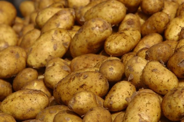 Скоро узбекистанцы попробуют французский картофель