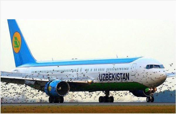 Стая птиц сорвала вылет самолета из Стамбула в Ташкент