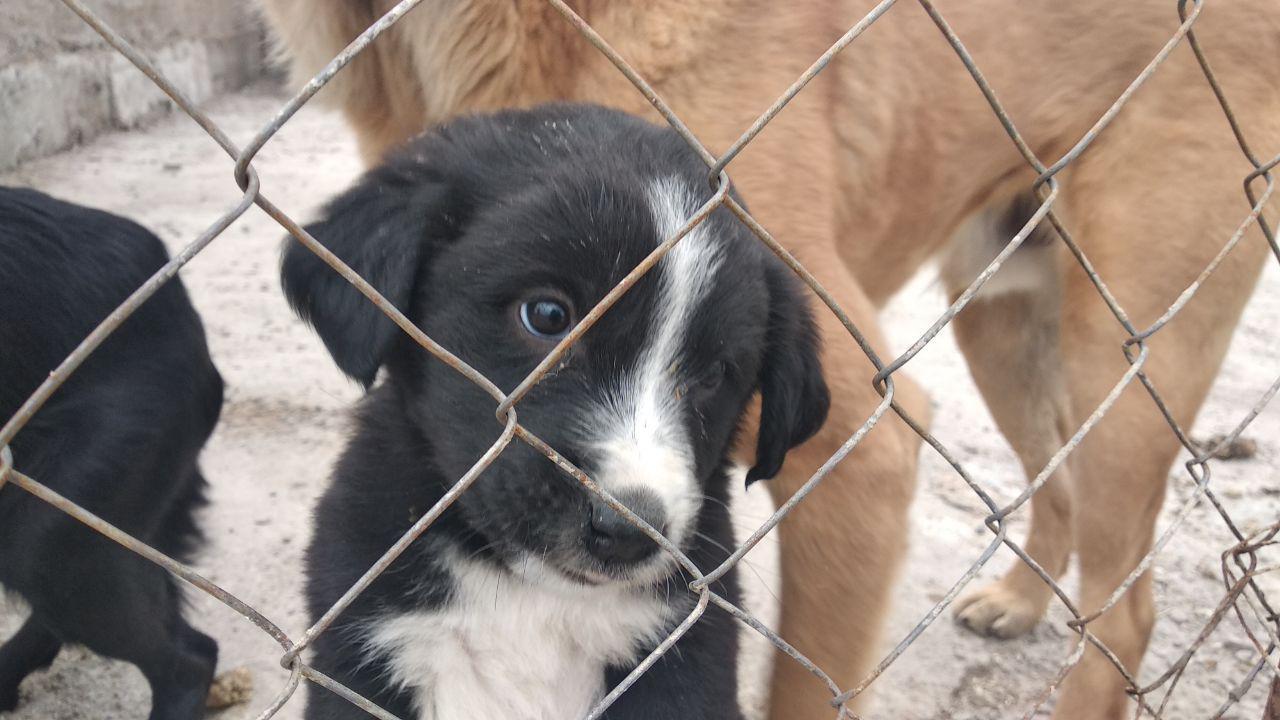 В ожидании чуда: как живется друзьям человека в приюте для животных «Хаёт»? (фото)