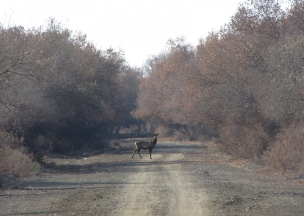 Как сохранить экосистемы в нижнем течении Амударьи?