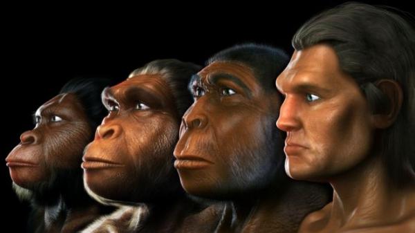Выявлен ранее неизвестный предок человека. Его открыл искусственный интеллект