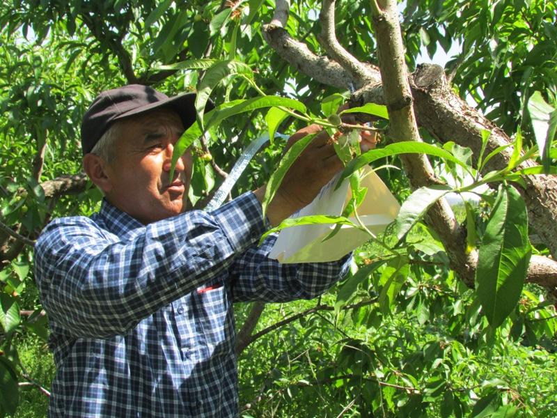 ПРООН продвигает экологичные методы борьбы с вредителями и болезнями растений вместо применения химии