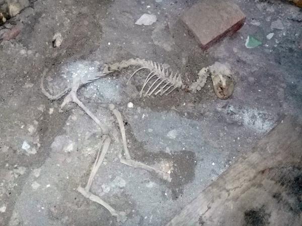 Житель Янгиюля обнаружил под своим домом скелет, который считает останками динозавра