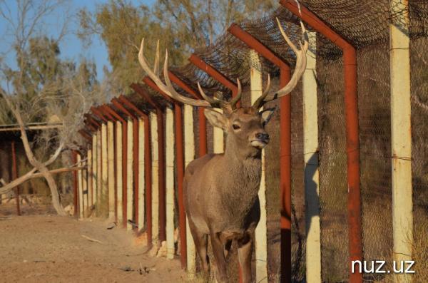 Ташкентский «сафари-парк» станет домом для львов и оленей