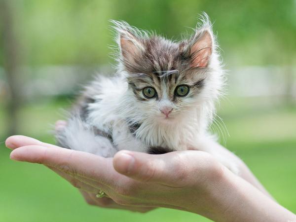 Я научу вас котиков любить: милиционер провел воспитательную работу с детьми, мучившими животных