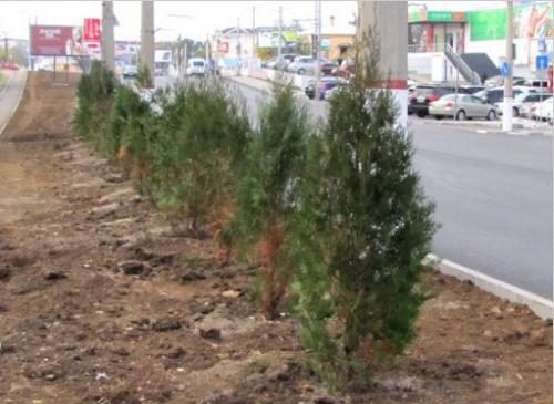 Вдоль ташкентских автодорог появится «Зеленый пояс»