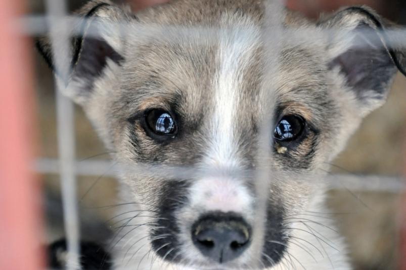 ГУВД Ташкента готовит предложения по  введению запрета на бои животных