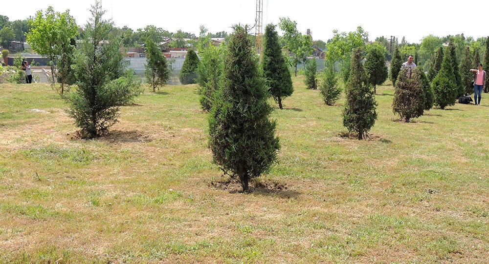 Турция подарила Ташкенту более 30 тысяч саженцев деревьев для высадки на улицах столицы