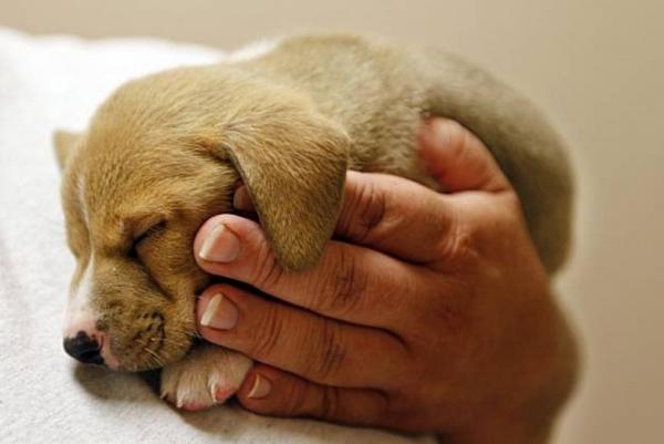 Проект закона об усилении ответственности за жестокое обращение с животными принят в первом чтении