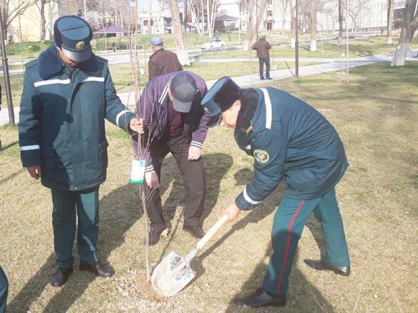 Начался фестиваль «Зеленая инициатива»: 9 марта сотрудники хокимията и ташкентского ГУВД высадили несколько тысяч деревьев