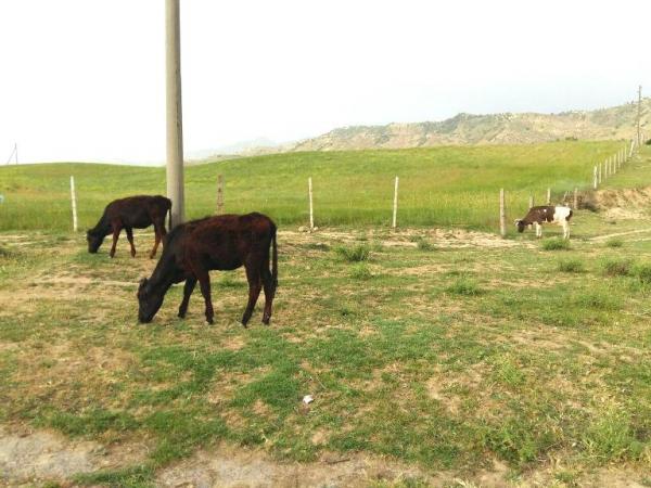 Узбекистан выделит животноводам богарные земли из районного резерва