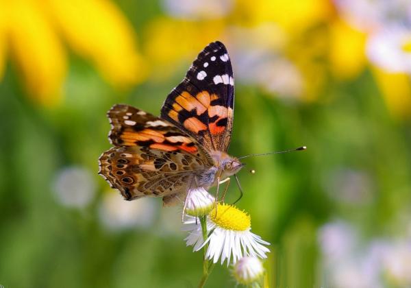 Ученые объяснили, с чем связано «нашествие бабочек» на Узбекистан