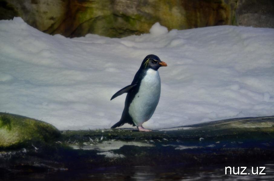 Удивление, удовольствие и созерцание – и это все о Берлинском зоопарке