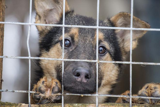 В Узбекистане предлагается создать службу спасения безнадзорных животных вместо отрядов по их отлову