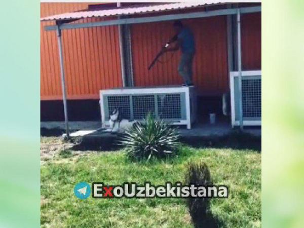 Житель Ташкента снял на видео убийство и расчленение своей собаки (видео 18+)