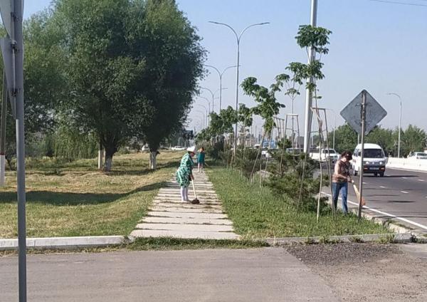 Руководитель электросети Ташобласти, вывозивший сотрудников на субботники вдоль трассы, оштрафован