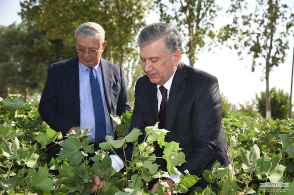 Президент определил приоритеты развития Каракалпакстана и специализацию для каждой области