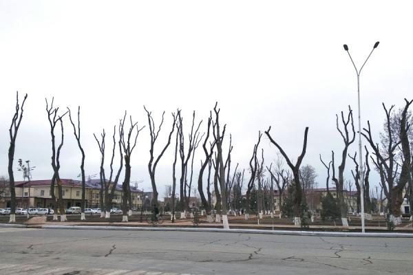 Открытое письмо руководству страны по проблеме массовых вырубок деревьев в Узбекистане