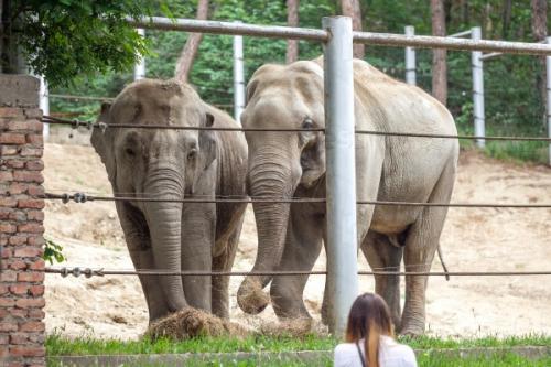 Запрещен экспорт слонов из Зимбабве, Ботсваны, Намибии и ЮАР на другие континенты
