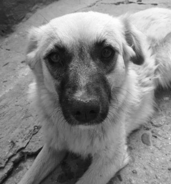 «После Самарканда»: каким должен быть закон о защите животных, чтобы он работал