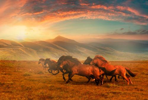 9 мифов о Средней Азии