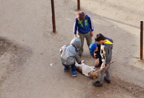 Жители Кувасая просят обуздать банду подростков, которые издеваются над животными