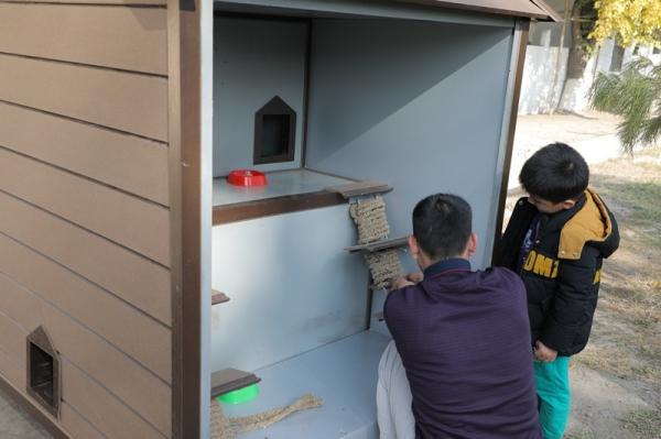 Под охраной ГУВД: в Ташкенте при отделениях милиции создаются котодомики (фото)
