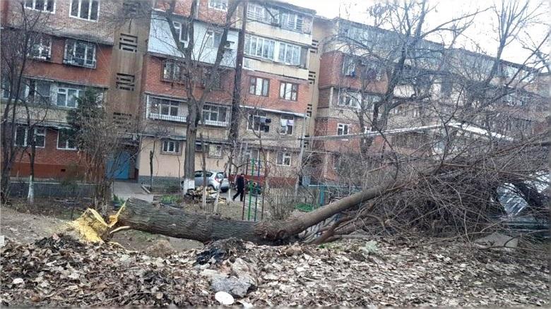 Мораторий - не указ: в Ташкенте снова рубят деревья