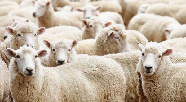Животноводство Узбекистана обретет новое дыхание