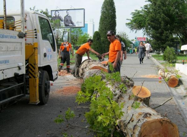 Перед вырубкой деревьев хокимияты должны будут проводить общественные слушания. Но не во всех случаях