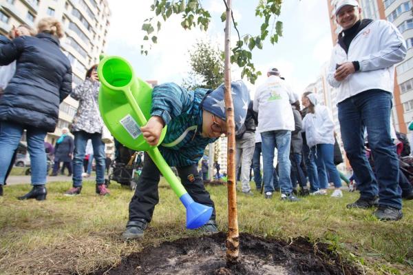 Госкомэкологии объяснил, кто должен отвечать за высаженные в городе деревья